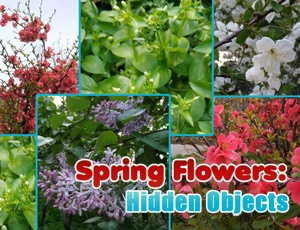 Spring Flowers: Hidden Objects