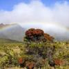 Maui Jigsaw